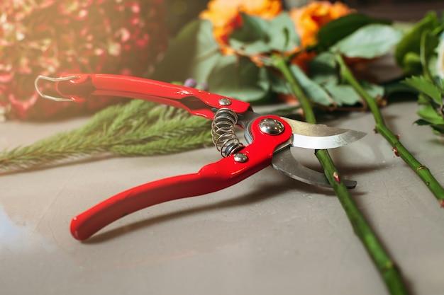 Rote gartenschere, die rose schneidet.