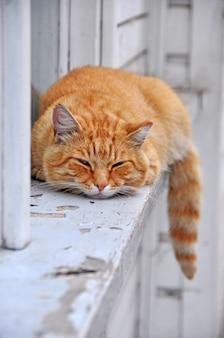 Rote getigerte katze, die auf der fensterbank schläft