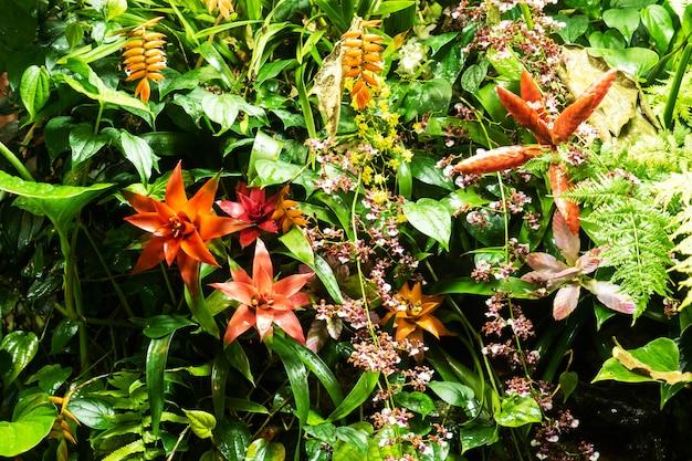 Rote guzmania-blumen, die in einem tropischen gewächshaus wachsen.
