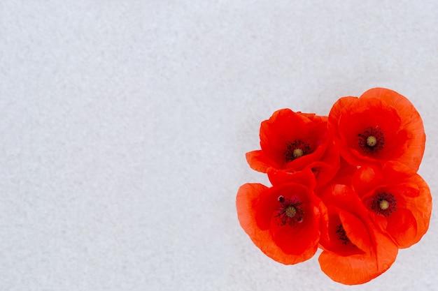 Rote helle mohnblumen auf grauem hintergrund, ansicht von oben. postkarte, vorlage für text.