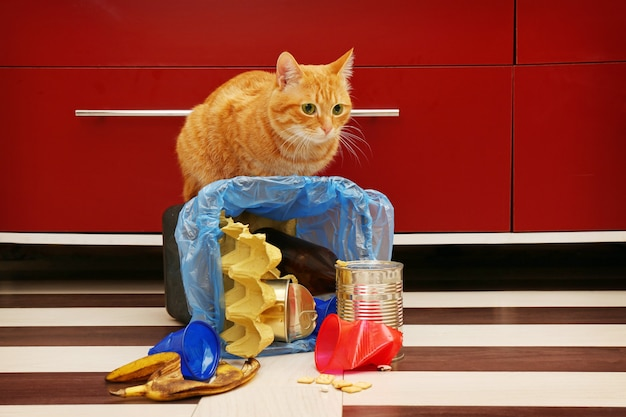 Rote katze am vollen umgekehrten müllkorb auf küchenboden