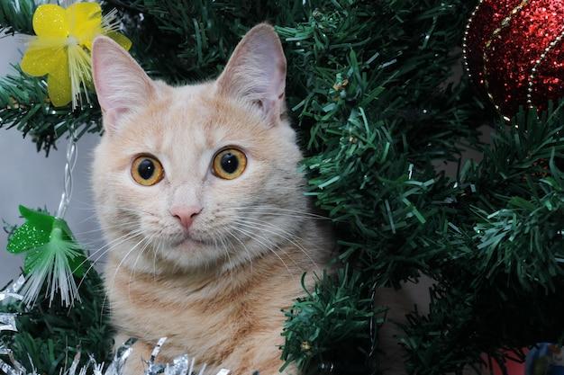 Rote katze auf dem weihnachtsbaum. frohes neues jahr.