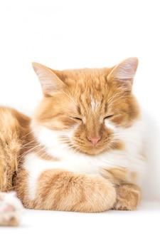 Rote katze, die auf einem fensterbrett lokalisiert auf weißem hintergrund liegt