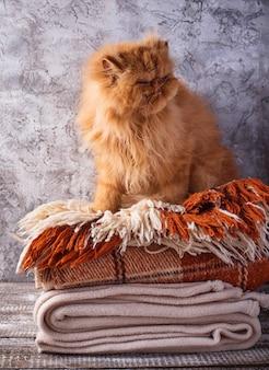 Rote katze, die auf einem stapel decken sitzt