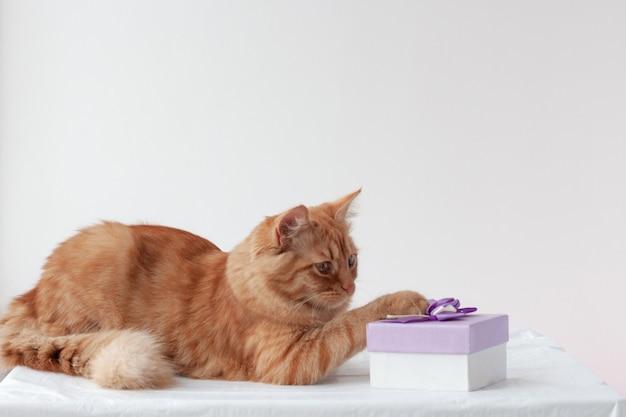 Rote katze, die auf einer weißen oberfläche liegt, legte seine pfote mit einem geschenk auf die schachtel
