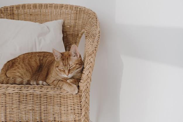 Rote katze, die auf rattanstuhl mit kissen schläft. minimale innenausstattung.