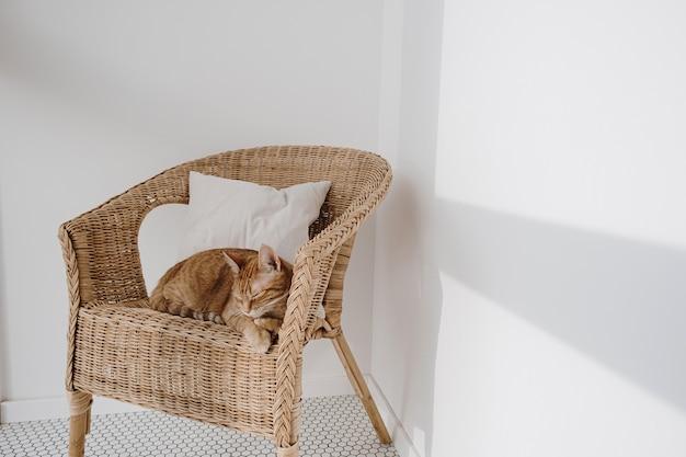 Rote katze, die auf rattanstuhl mit kissen schläft