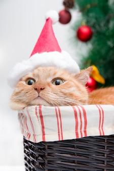 Rote katze im weihnachtsmannhut liegt in einem weidenkorb