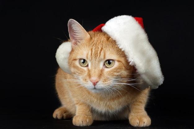Rote katze in der weihnachtsmannmütze sitzt auf einem schwarzen hintergrund, neujahrskarte, weihnachtsstimmung.