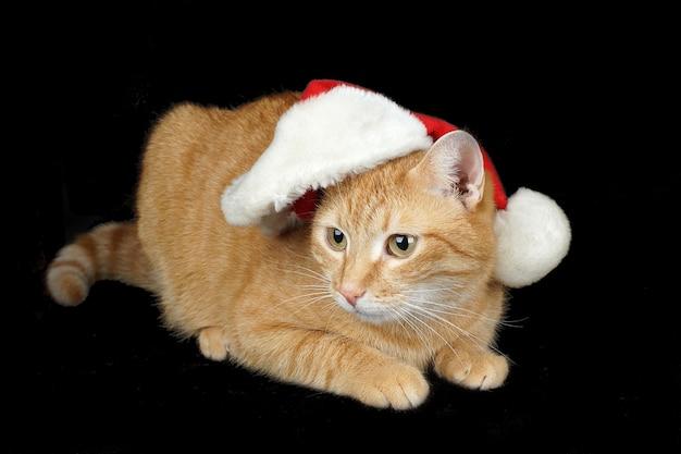 Rote katze in einer weihnachtsmütze liegt auf einem schwarzen hintergrund.