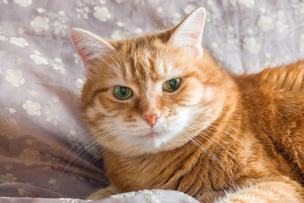 Rote katze liegend ruhen auf einer decke