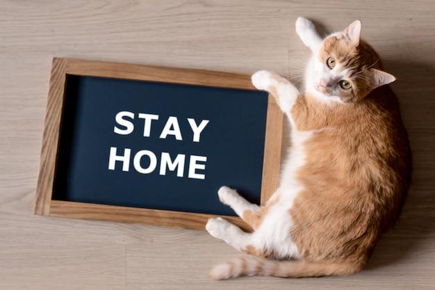 Rote katze mit verwischtem plakat im rahmen mit den worten bleiben zu hause