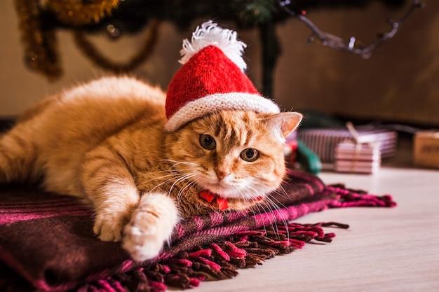 Rote katze trägt weihnachtsmannhut, der unter weihnachtsbaum liegt.