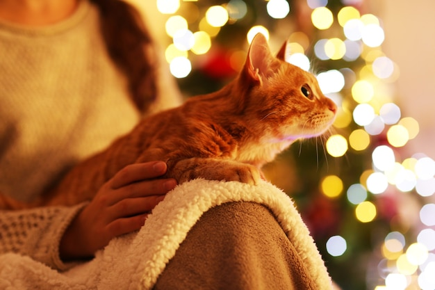 Rote katze zu hause in der weihnachtszeit