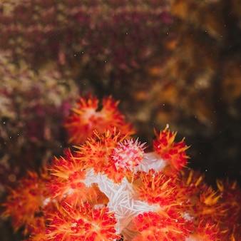 Rote koralle im quadratischen format