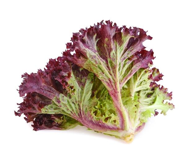 Rote korallensalat oder salat auf dem weißen hintergrund isoliert