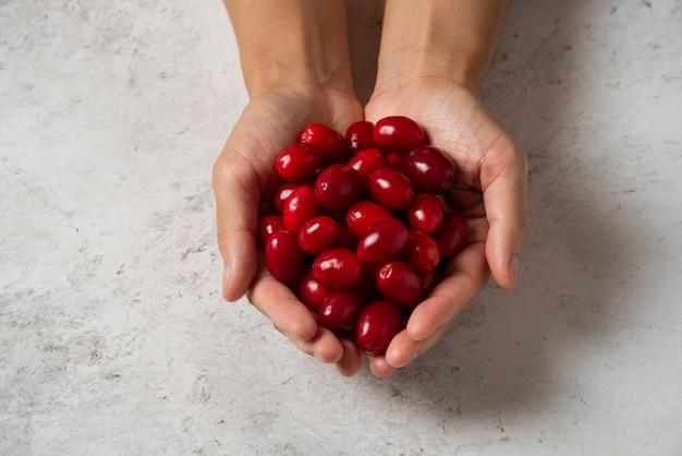 Rote kornelkirschen in der hand einer person.
