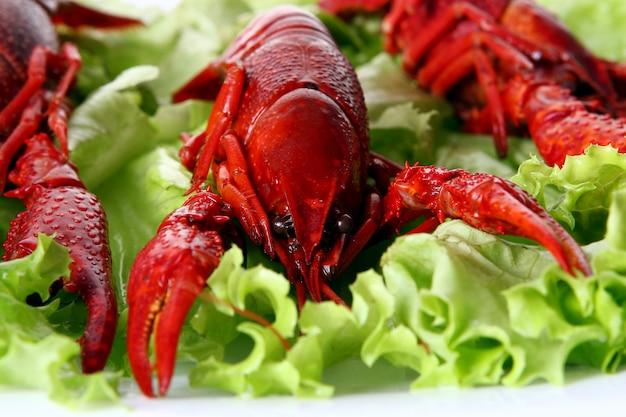 Rote kralle mit grünem salat