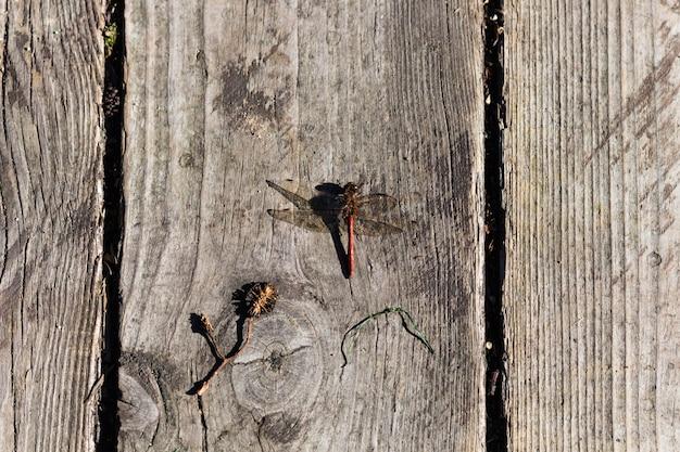 Rote libelle auf einem brett