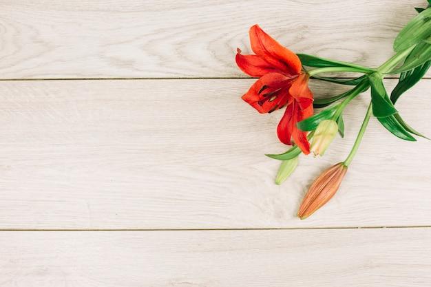 Rote lilienblume mit der knospe auf hölzernem schreibtisch