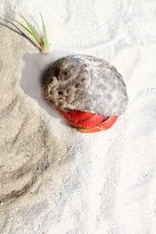 Rote mit beinen versehene einsiedlerkrebs im mexiko-strandsand