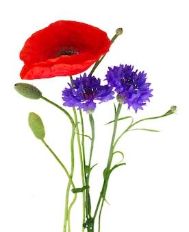 Rote mohnblumen und blaue kornblumen mit knospen isoliert