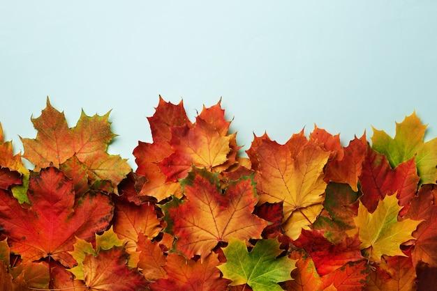Rote, orange, gelbe und grüne ahornblätter auf blauem hintergrund.