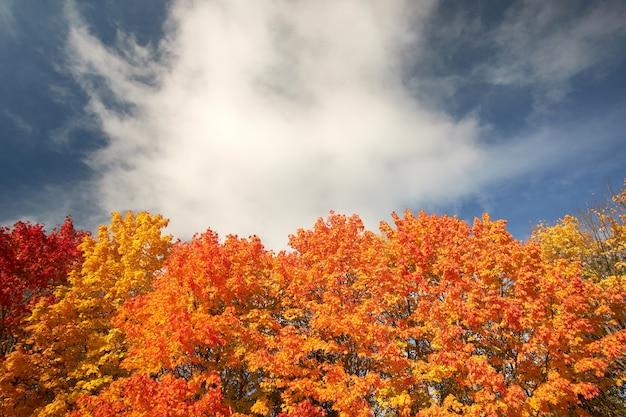 Rote, orange und gelbe herbstbäume gegen den blauen himmel