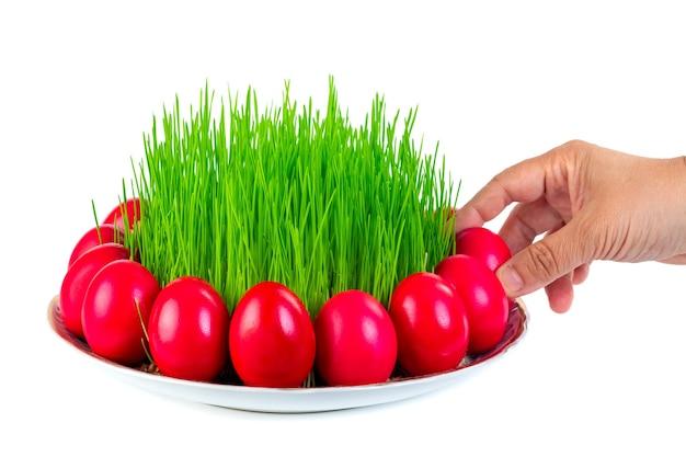 Rote ostereier um weizengras auf der platte lokalisiert auf weißer frauenhand