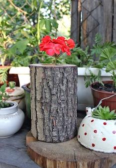 Rote pelargonie in einem hölzernen vase im garten