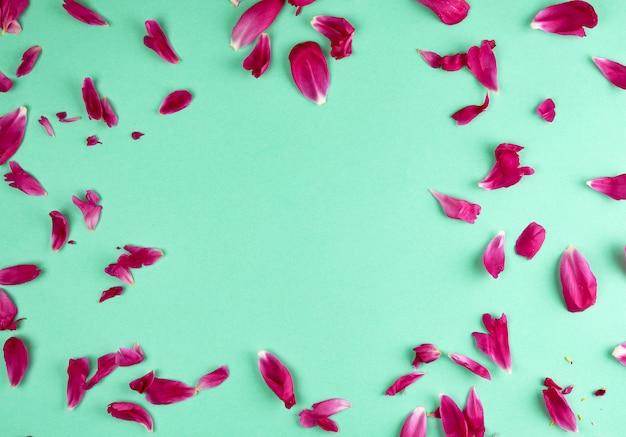 Rote pfingstrosenblumenblätter auf einem grünen hintergrund, voller rahmen