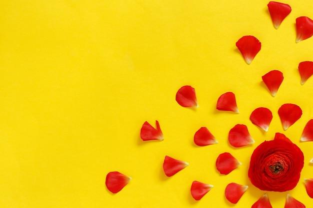 Rote ranunkelblumen und blütenblätter auf einer gelben hintergrundoberansicht