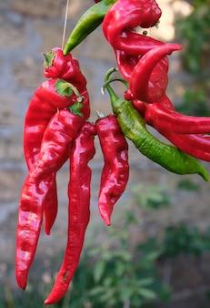 Rote rohe reife pfeffer des scharfen paprikas, die an einem seil hängen