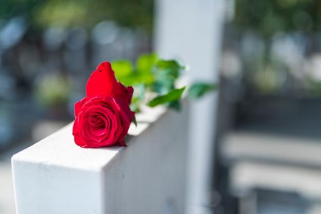 Rote rose auf dem grabstein