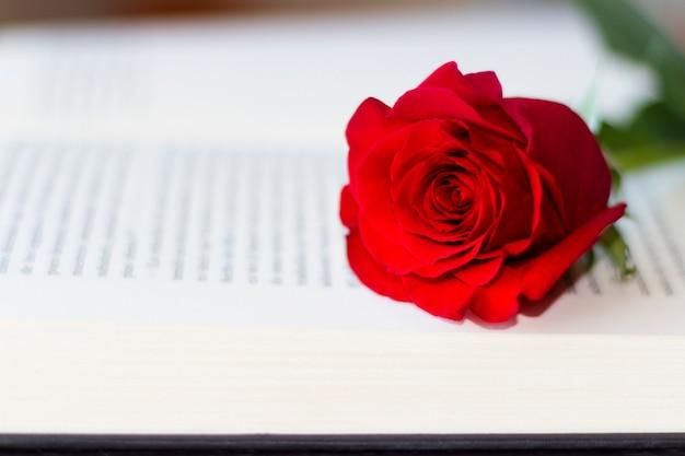 Rote rose auf dem offenen buch