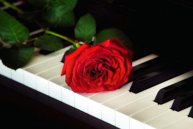 Rote rose auf der oberseite der flügel
