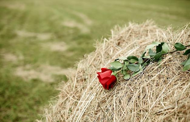 Rote rose auf einem heuhaufen