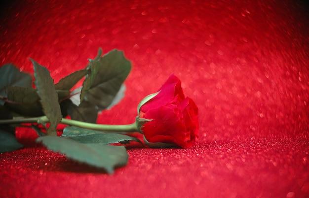 Rote rose auf rotem, unscharfem hintergrund, copyspase.