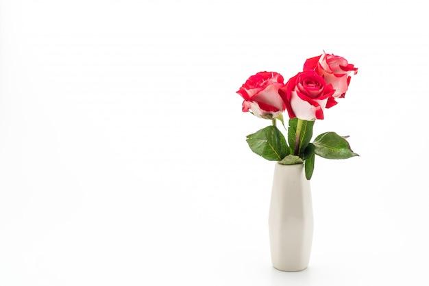 Rote rose auf weiß