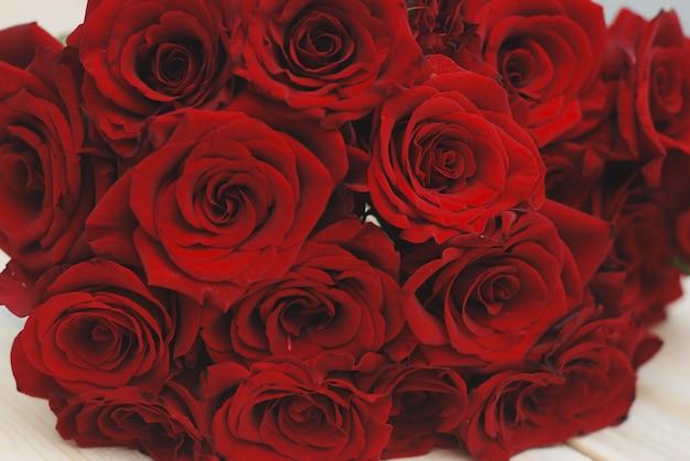 Rote rose blüht beschaffenheit