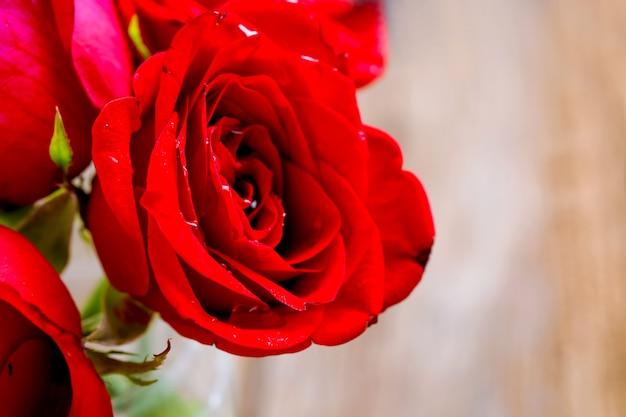 Rote rose im romantischen hintergrund.