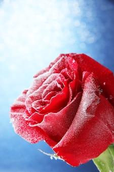 Rote rose im schnee auf blauem hintergrund