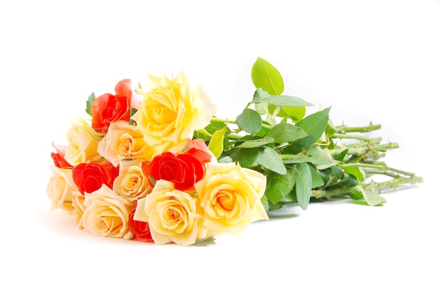 Rote rose isoliert isoliert auf weiß