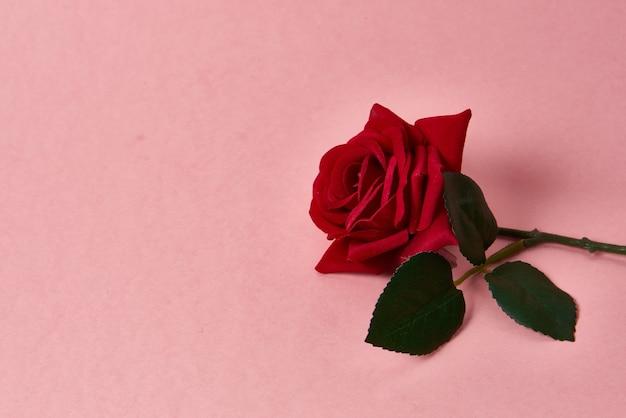 Rote rose mit dornen auf rosa hintergrund