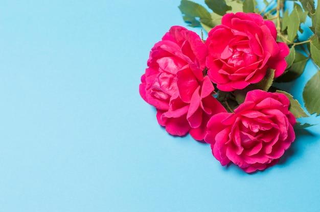Rote rosen auf einem blauen