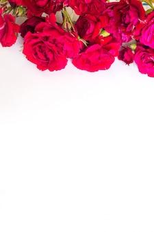 Rote rosen auf einem weißen hintergrund