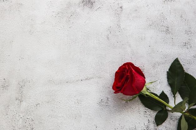 Rote rosen auf grauem steinhintergrund. liebeskonzept valentinstag.