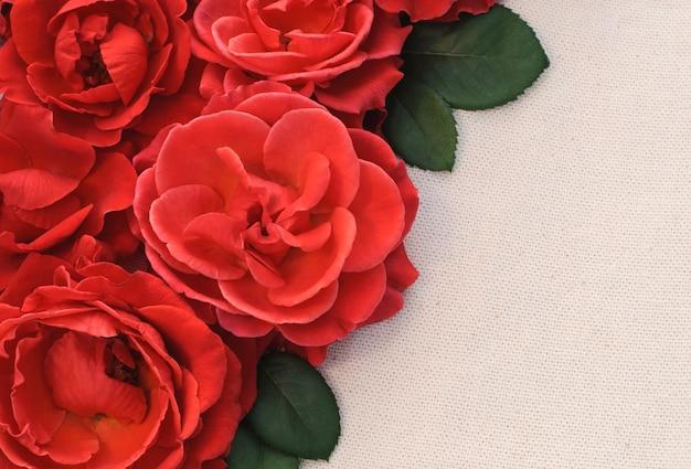 Rote rosen auf hellem hintergrund, grußkarte