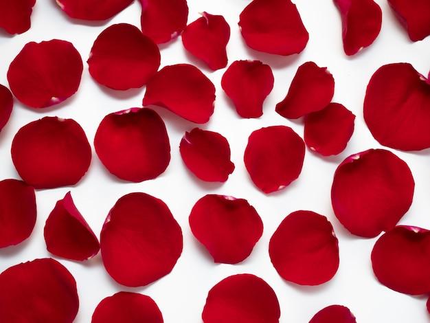 Rote rosenblätter
