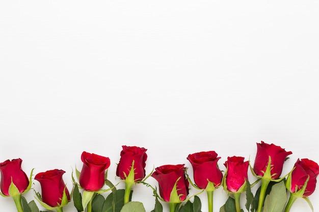 Rote rosenblüten auf weiß.